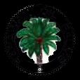 SOP | SARAWAK OIL PALMS BHD